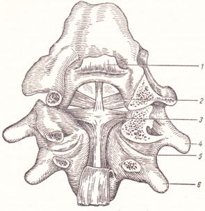 Соединение I и II шейных позвонков между собой и с черепом